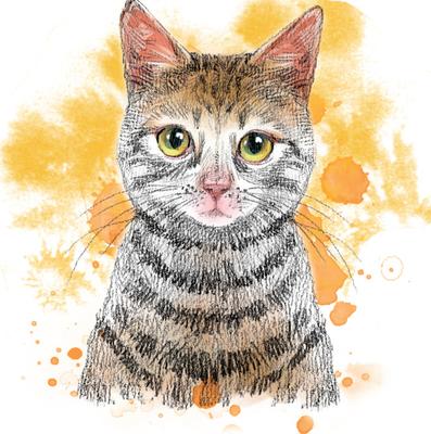 [散文随笔]名叫彼得的猫